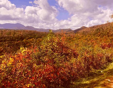 franklin_north_carolina_great_outdoors_rv_resort_fall_leaves